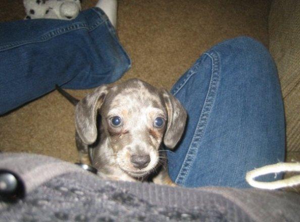 Cobalt little baby