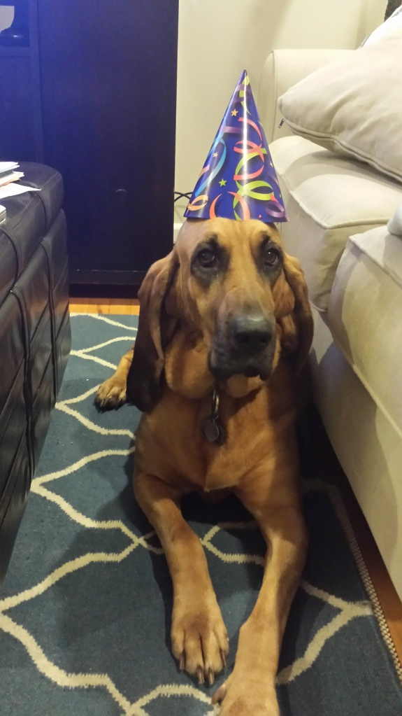 Nick Birthday - Mabel Bloodhound